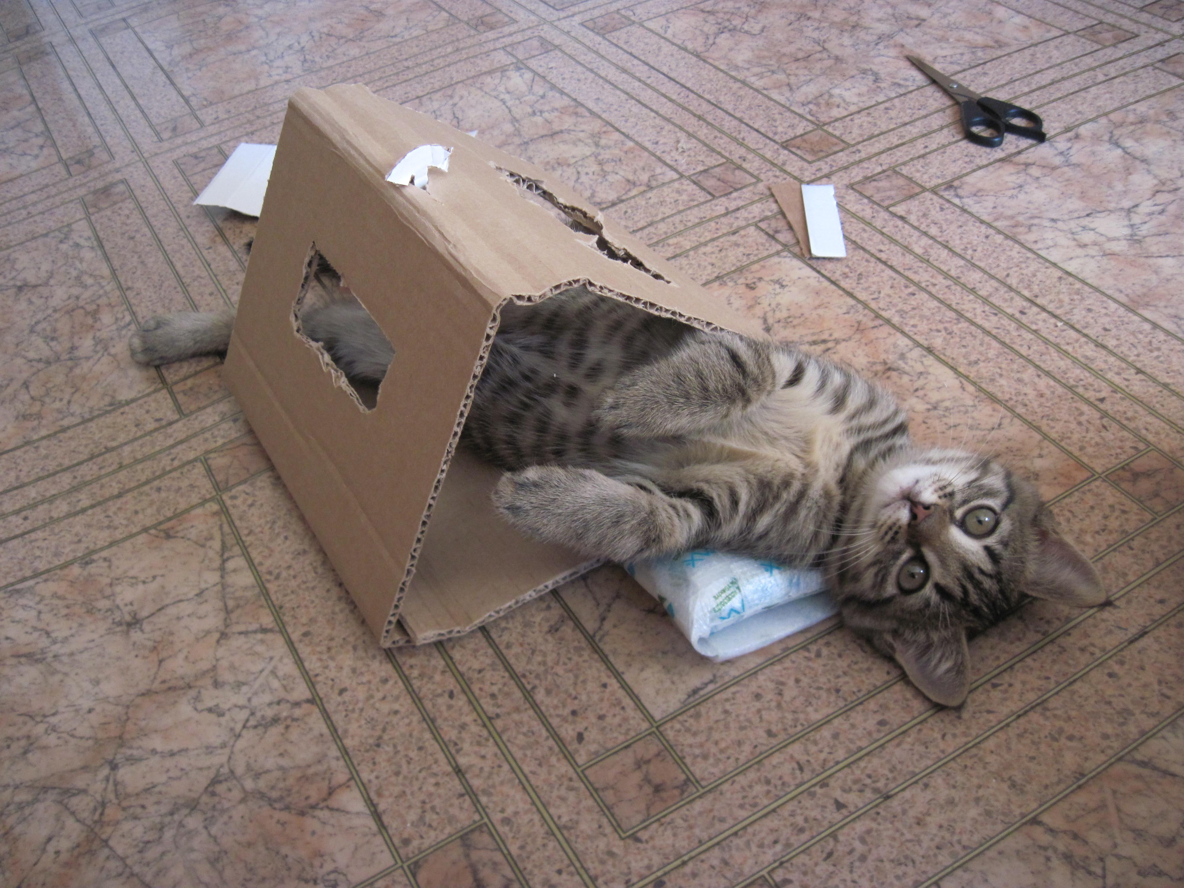 Орет кошка что делать в домашних условиях 158